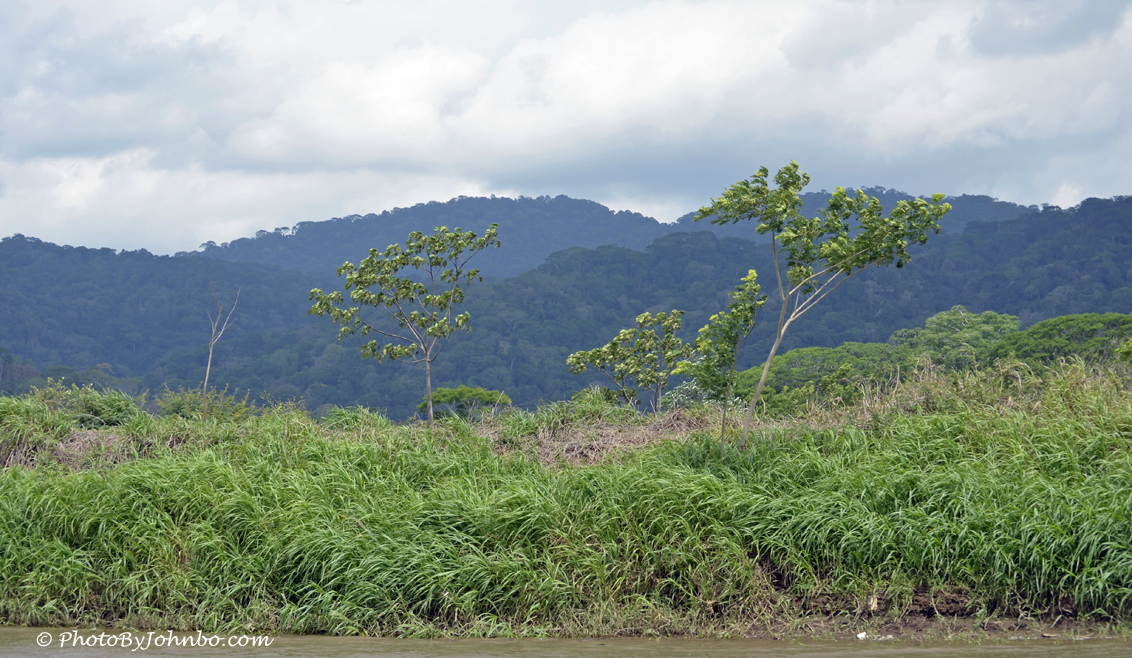 trip to jungle essay