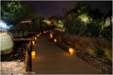 Desert Botanical Garden Luminarias