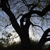 Lens Artists Photo Challenge - Trees