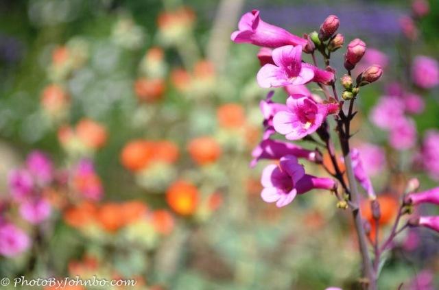 Garden_Fave-13