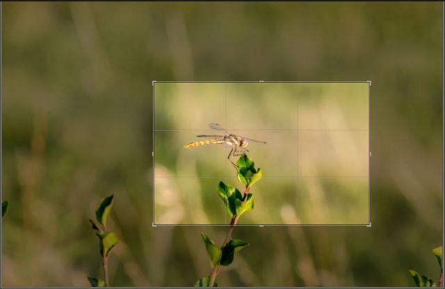 DragonflyCrop