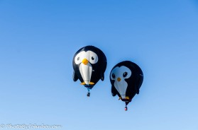 Balloon Fiesta-19