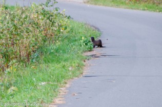 Early morning Otter Walk.