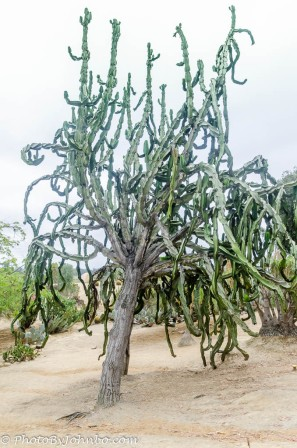 A cactus tree?!?!