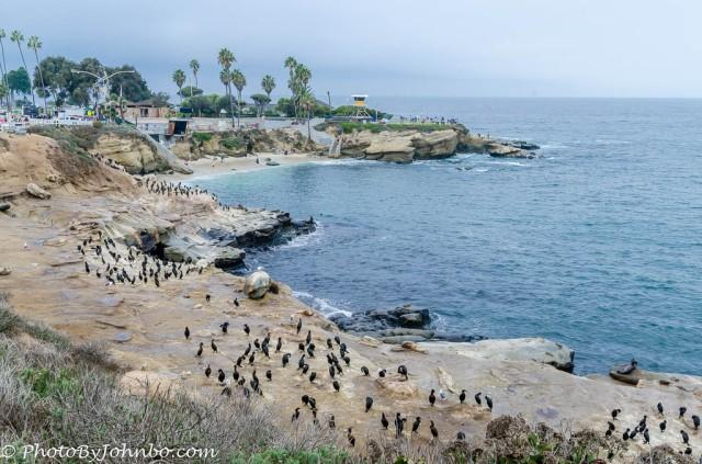 La Jolla Cove-1