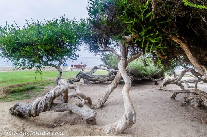 La Jolla Cove-11