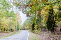 All NC roads look like this in the fall.