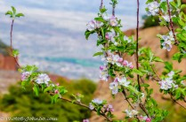 Spring flowers on the mountain.