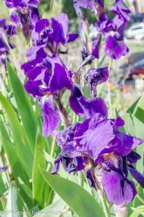 Spring in Arizona brings flowers.