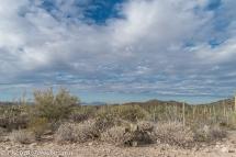 saguaro-np-2