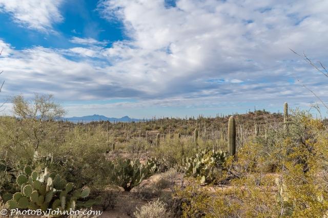 saguaro-np-3