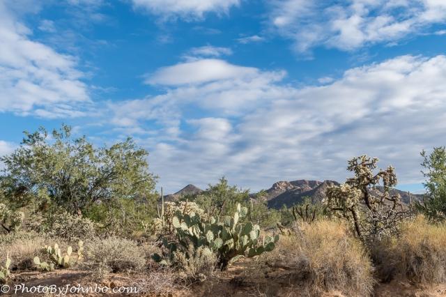 saguaro-np-4