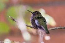 Humming bird aviary.
