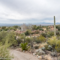 Arizona-Sonora Desert Museum - A Living Tribute to Desert Plants and Animals