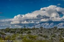 saguaro-np-5