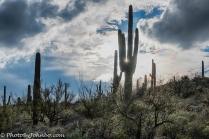 saguaro-np-6