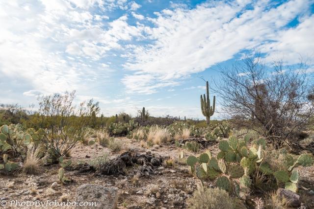 saguaro-np-7