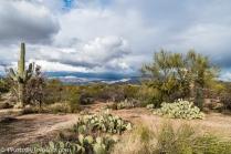 saguaro-np-8