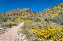 Mesquite Canyon Trail.