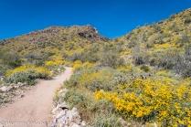 Mesquite Canyon Trail.