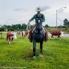 Cattle Drive-5