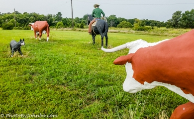 Cattle Drive-2