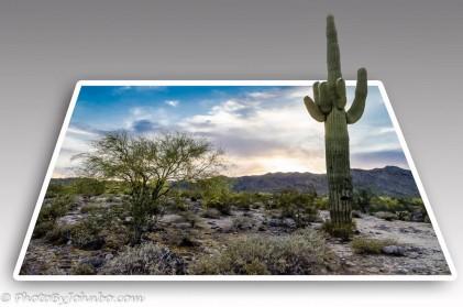 Arizona Scene