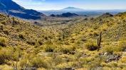 Desert Spring-1