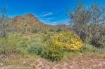 Desert Spring-2