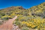 Desert Spring-3