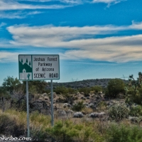 Joshua Forest Parkway - The Saguaro of the Mojave
