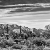 White Tank Mountain Park - A Gallery in Black and White