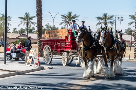 Clydesdales-18
