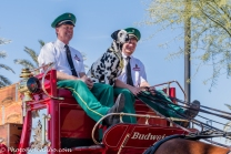 Clydesdales-19