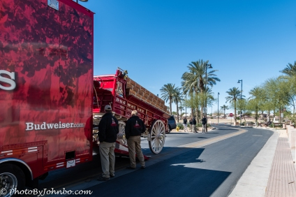 Clydesdales-2