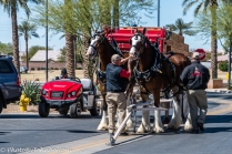 Clydesdales-8