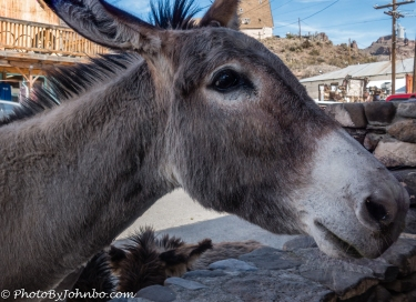 Friendly burro.