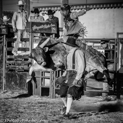 Bullfider at work