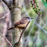 Beaver Lake Bird Sanctuary - Wildlife Oasis in the City