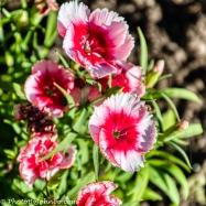duke gardens-3