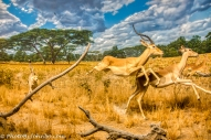 Africa Diorama-2