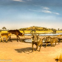 Museum of Nature and Science - Africa Dioramas