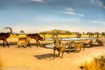 Africa Diorama-6