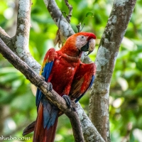 Natuwa - Wildlife Rescue in Costa Rica