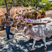 Pilgrimage to Popoyuapa - A Holy Week Tradition